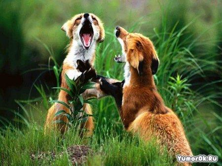 Позитивные зверята