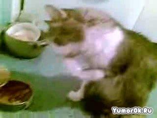 Кошак интеллегент