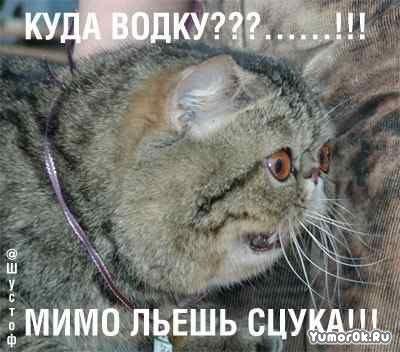 Опять про котов