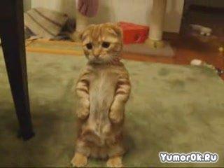 Найден кот из Шрэка!!!