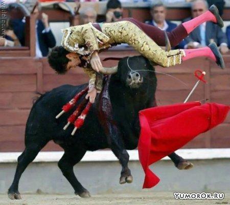 Коррида - кровавый спорт
