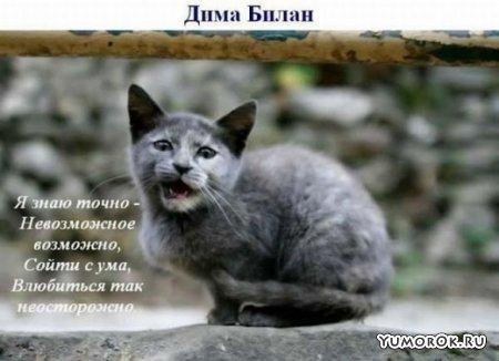 Коты поют песни!