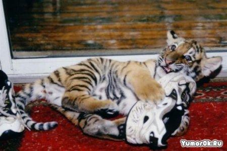 Тигры большые кошки