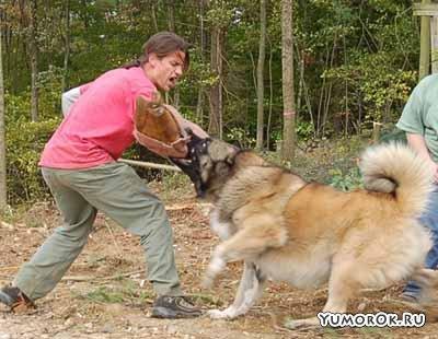 Тренировка бешенного пса