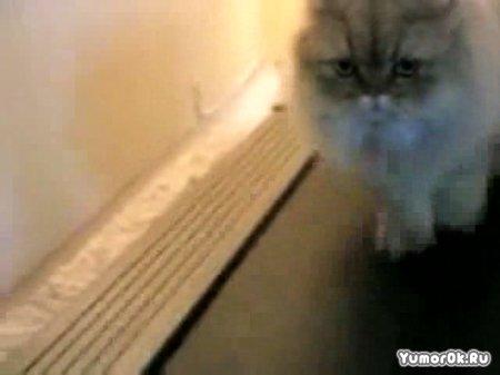 Коты VS беговые дорожки