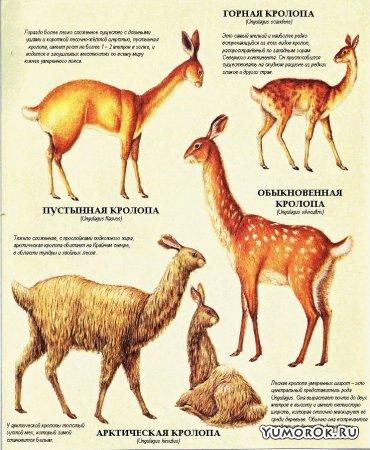 Зоология будущего