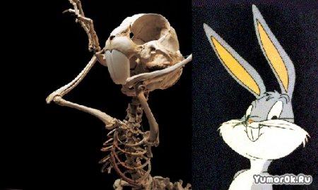 Скелеты Диснея