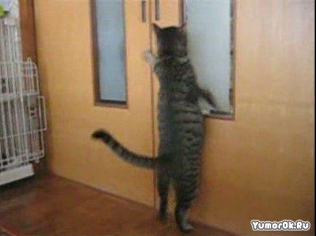 Пустите кота
