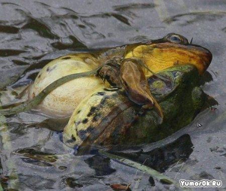 Камасутра для лягушек
