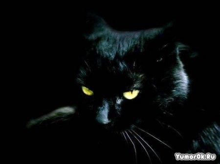 Черные животные