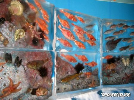 Ледяной аквариум