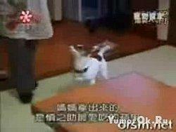 Собака акробат
