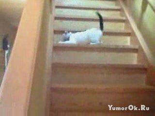 Кошка и лестница