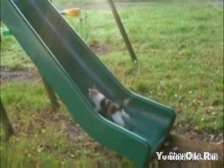 Горка для кошек