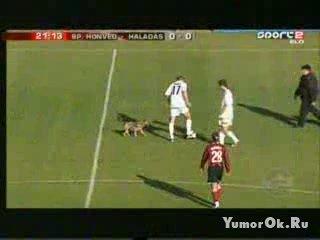 Как собаку с футбольного поля гоняли