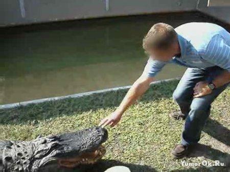 Крокодилы дядькам не игрушка