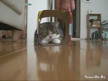 Кот проныра