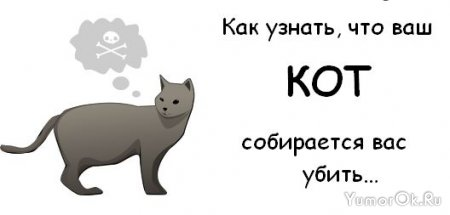 Как узнать истинные намерения кота