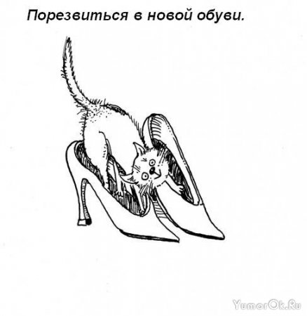 Обязанности кота по дому