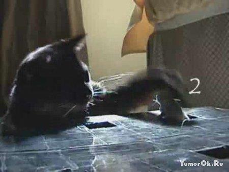 Игровой автомат для котов