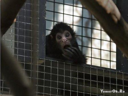 Как удивляются животные