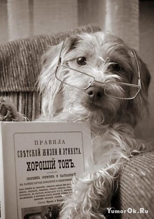 Очень образованные животные!
