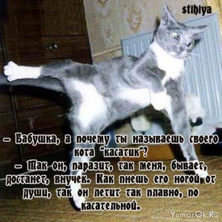 Анекдоты от stihiya