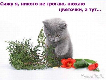 История про котенка