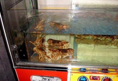 Автомат по отлову раков