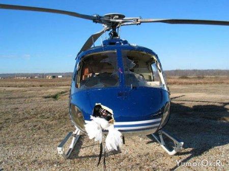 Вертолет против стаи птиц