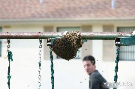 Война с пчелами