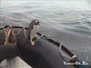 Находчивый пингвин
