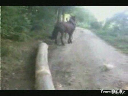 Лошадке респект - нефиг мучать её было