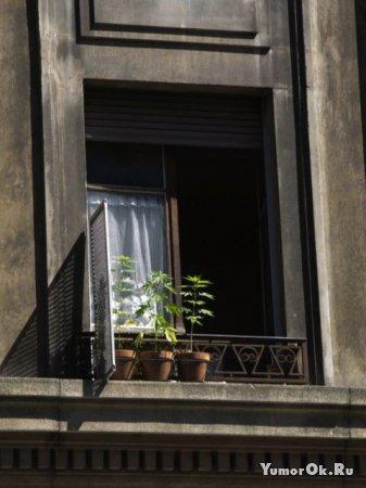 О домашних растениях