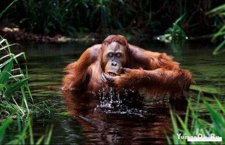 Пьющие животные