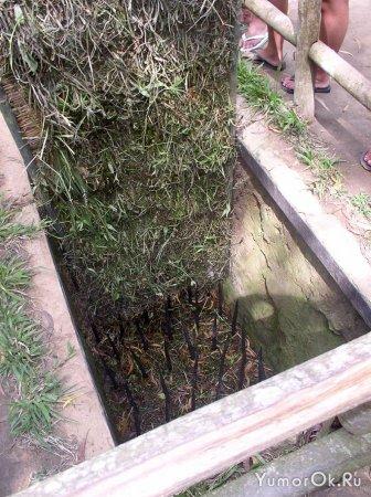Вьетнамские ловушки