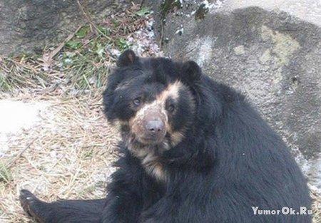 Одинокий медведь