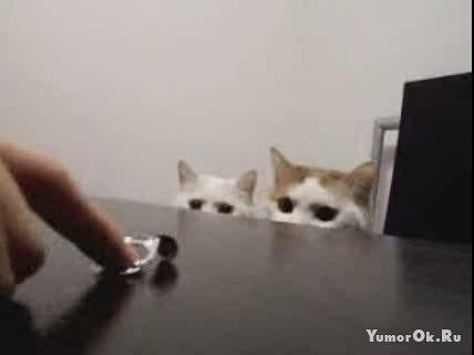 Коты жгут