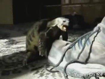 Черепаха против ботинка