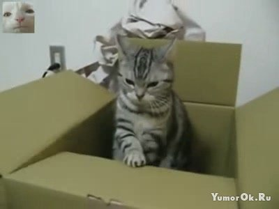 Кот передает сигнал SOS