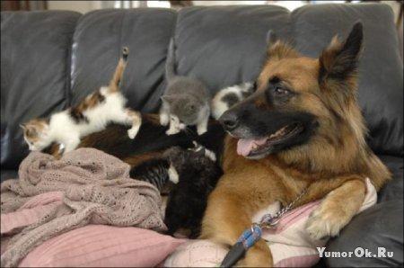 У котят новая мама