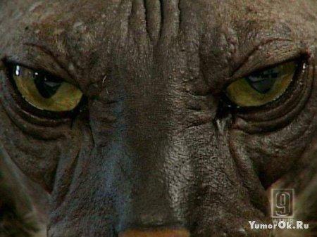 Страшный котик