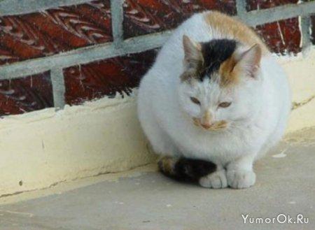 Кто же поможет котику согреться?