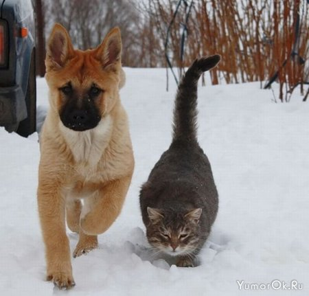 Дружба кота и пса