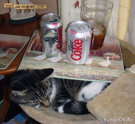 Мегатерпеливые коты