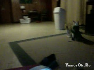 Кот с повадками собаки