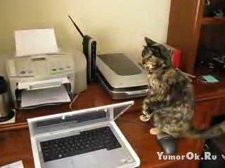 Не пугайте кота
