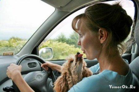 Женщины и собачки