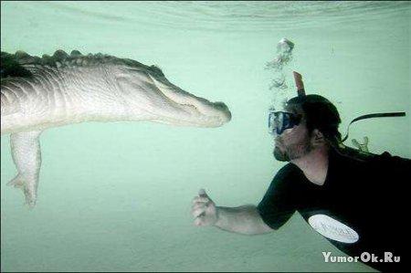 Пловец с крокодилами