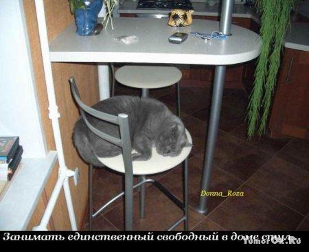 Обязанности домашних котов